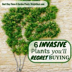6 invasive Plants that You'll Regret Planting in Your Yard