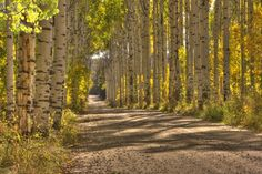 Aspen Alley in Southeast Wyoming. Autumn is one of the most beautiful times of year! http://www.cheyenne.org/things-to-do/day-trips/