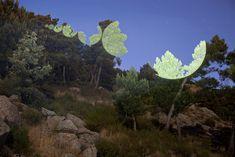 Intervención sobre el paisaje, paisaje intervenido, geometría y paisaje