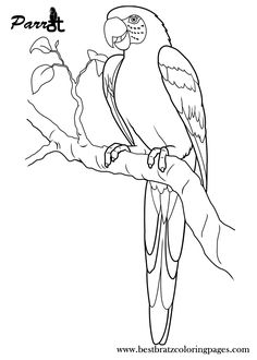 Parrot Coloring Pages | Cinderella | Pinterest | Bird, Adult Coloring And  Mosaics