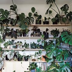 Weekends are for relaxed gardening.  by @armellehabib for PLANT SOCIETY the book. .  .  .  .  #theplantsociety #theworkershouse #plantstagram #plantsofinstagram #houseplants #indoorplants #houseplantsofinstagram #plantsmakepeoplehappy #plantsarefriends #botany #plantgoals #greenery #plants #plantbased #plantsociety #foliage #leaf #plantlife #urbanjunglebloggers #plantparenthood #plantshelfie #nothingisordinary #liveauthentic #植物のある暮らし #정원 #観葉植物 #plantas #pflan