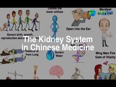 All About the TCM Kidneys | AcuPro Academy