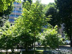 Green in the City with italia multimedia & laboratori creativi beretta