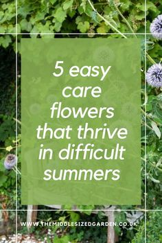 Pretty, low maintenance flowers that will (usually) survive anything...keep your garden or backyard blooming in difficult weather #middlesizedgarden Low Maintenance Garden Design, Garden Privacy, Rose Varieties, Invasive Plants, Cottage Garden Plants, Colorful Garden, Easy Garden, Cool Plants, Small Gardens