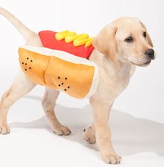 Hot Dog Pet Costume (2012 - Discontinued)