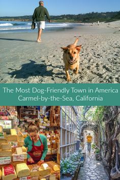 A travel guide for the dog crazy little town of Carmel-by-the-Sea, California. Dog-friendly things to do, places to eat, and hotels in Carmel, Monterey Bay.