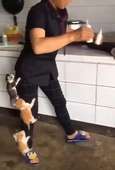 So Cute kittens Funny Animal Videos, Cute Funny Animals, Cute Baby Animals, Funny Cats, Memes Humor, Drunk Memes, Funny Memes, Tf2 Memes, Movie Memes