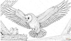 Barn Owl Brings a Prey for Its Babies coloring page from Owls category. Select from 26736 printable crafts of cartoons, nature, animals, Bible and many more. Baby Coloring Pages, Animal Coloring Pages, Printable Coloring Pages, Moon Sketches, Cute Baby Owl, Owl Crafts, Owl Art, Crochet, Free Printable