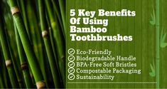 Toothbrushes come in various shapes, sizes, bristle texture, and component materials. One of the latest trends is the launch of Bamboo toothbrushes.