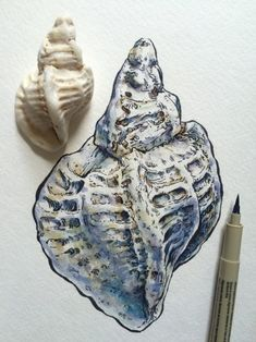 ♔ Best Picture For Sealife Drawing ocean For Your Taste You are looking for something, Gcse Art Sketchbook, Sea Life Art, Observational Drawing, Nature Drawing, A Level Art, Wow Art, Sketchbook Inspiration, Natural Forms, Art Tutorials