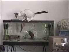 One Cat That Never Wanted Fish Again...