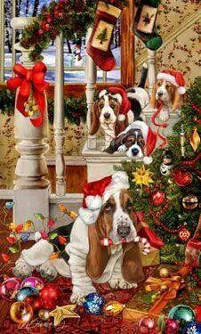 Basset Hounds at Christmas