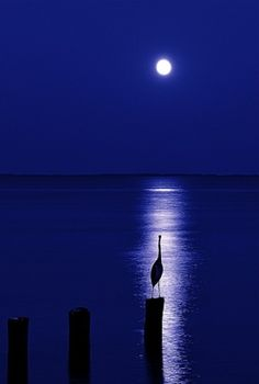 love the moon light reflection by Blaze Masters