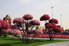 Dubai Miracle Garden - цветочное царство среди пустыни!