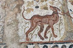 Hunting dog tied to a tree. Heraclea Lyncestis. Macedonia/Fyrom. 4th-6th century AD. Photo: Helen Miles Mosaics