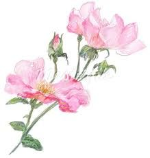 pink illustrations - Google Search