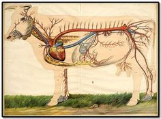 forget me not [smile]: cow anatomy