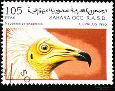 Sahrawi+1996+Birds+of+Prey+Portrait+stamp+-+Neophron+percnopterus+105+ptas.jpg (1600×1275)