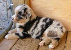 Cachorro-Pelagem-Diferente-21