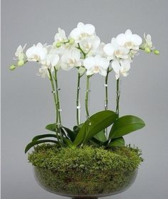 Send the perfect flowers from Muguet Florist. We offer the freshest and most beautiful flowers for Beverly Hills flower delivery. Ikebana, White Orchids, White Flowers, Beautiful Flowers, Diy Flowers, Flowers Vase, Spring Flowers, Orchid Flower Arrangements, Orchid Plants
