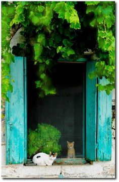 Doorway with kittens Crazy Cat Lady, Crazy Cats, I Love Cats, Cute Cats, Painted Outdoor Furniture, Cat Window, Types Of Painting, Windows, Here Kitty Kitty