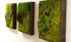 Moss walls: the newest trend in biophilic interiors | Inhabitat - Sustainable Design Innovation, Eco Architecture, Green Building