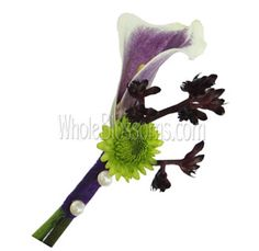 Whole Blossoms offers Bi-Color Lavender Mini Calla Boutonniere Flower for Easter, Birthdays, and everyday occasions. Ranunculus Wedding Bouquet, Garden Rose Bouquet, Bridal Bouquets, Allium Flowers, Ranunculus Flowers, Purple Flowers, Magnolia Bouquet, Magnolia Leaves, Flowers For Sale