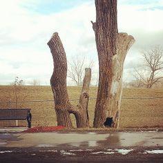 HI tree, Omaha, Nebraska
