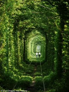 Amos Chapple / Tunnel of Love    Kleven, Ukraine.