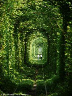 Romantic forest alley in Ukraine