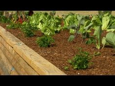 How to Get Started with Raised Garden Beds | P. Allen Smith Classics