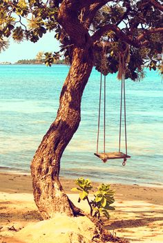tree swing on the beach