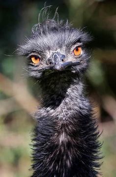 Emu. Beautiful prehistoric birds. They are quite odd looking and can be Very dangerous. One swipe of their claws could rip you apart.