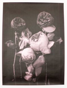 A composition of delicately wilting roses, printed in greyscale on color paper. The color of the paper lends a glowing quality to the flowers. Debbie Carlos' printing technique lends a rough and textural aesthetic to the image. #mooreaseal