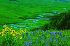 https://flic.kr/p/djNYoW | Wildflowers and East River | I uploaded this image once before but I like this version better after sharpening the river and flowers. These flowers sit beside the Gothic Road and maybe 600 vertical feet above the river valley.  The river meaders just to the east of Crested Butte, Colorado.