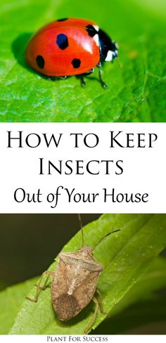 This is the time for pest control! Dont let ladybugs, seed bugs, and stink bugs invade your home. Learn how to identify, and remove insects in your house, and keep them out for good! #diyhome #homemaintenance #bugcontrol