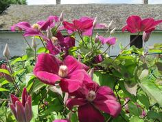 Beautiful Flowers Garden, Beautiful Roses, Plants, Gardening, Beautiful Landscapes, Balcony, Lawn And Garden, Plant, Planets