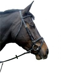 Amerigo Vespucci Flash Bridle - Saddlery - The Horse