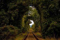Wood tracks