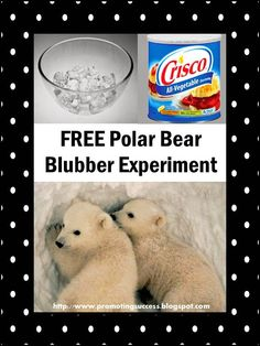 January Holidays, Activities, and Ideas Free Polar Bear Experiment PLUS lots other winter activity i 1st Grade Science, Kindergarten Science, Elementary Science, Science Experiments Kids, Science Classroom, Science Lessons, Teaching Science, Science Activities, Teaching Resources
