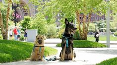 Boston is a great place to visit with your dogs! A pet friendly trip here feeds both your love of history and the outdoors. Find more pet friendly places to stay and things to do in Boston here: http://www.gopetfriendly.com/browse/united-states/massachusetts/boston
