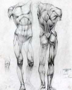 #structure #academic #drawing #anatomy