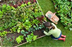 4 Natural Remedies to Keep Pests Out of the Garden