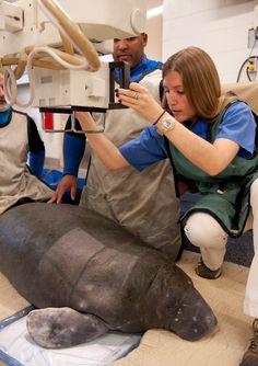 My dream job...as a Marine mammal Veterinarian.