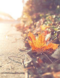 Herfstblad, zo mooi...