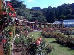 Wellington Botanic Garden, Wellington, New Zealand. New Zealand North, New Zealand Travel, Wellington New Zealand, The Beautiful Country, Dream City, Garden Spaces, Fiji, What Is Like, Wonderful Places