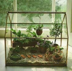 Tiny Terrariums, Mini Gardens and Victorian Wardian Cases