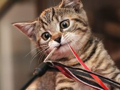 """""""The enthusiasm of a kitten is contagious."""" --Jo Kittinger"""