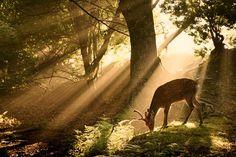 今朝奈良公園で撮った鹿が神々しすぎてやばかった|ねたAtoZ
