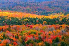 Allegany National Forest - Warren County, PA